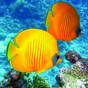 Qwell_Snorkeling_Article_5